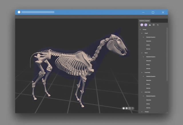 نمایش سه بعدی آناتومی اسب